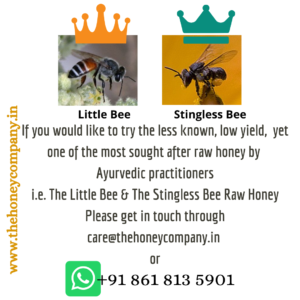 Little Bee and Stingless Bee
